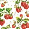 Плодове и Зеленчуци (34)