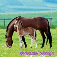 Салфетка- Двойка коне 005