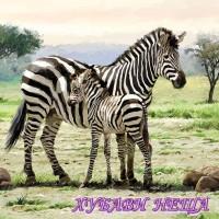 Салфетка- 442 Zebras