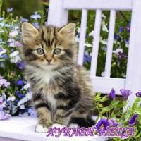 Салфетка- 0639 Kitty