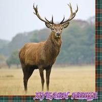 Салфетка- 0846 Proud Elk