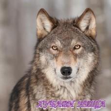 Салфетка- 1400 Grey Wolf 1бр