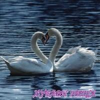 Салфетка- 0099 White Swans