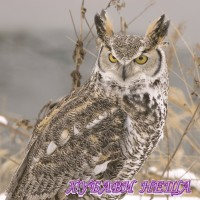 Салфетка- 857 Winter Owl